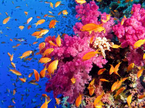 ocean coral reef