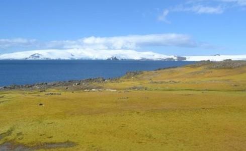 antartic-greening-by-Matt-Amesbury