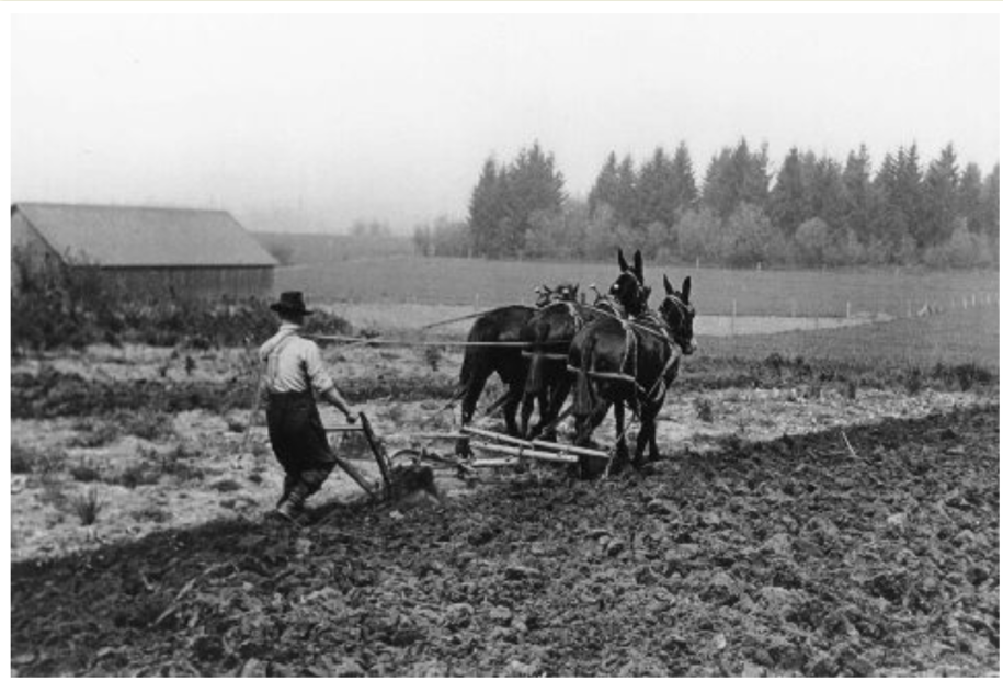 Farmer courtesy of Wanda Anderson - NOT Monsanto