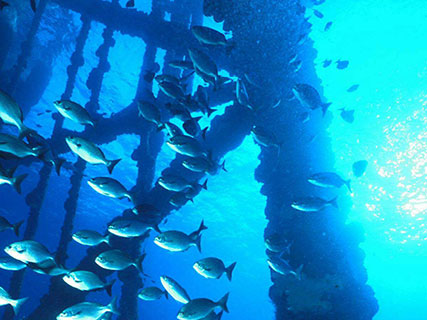 Fish by oil rig, photo by rigs to reefs