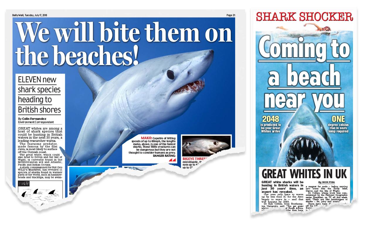 shark week: great whites in great britain