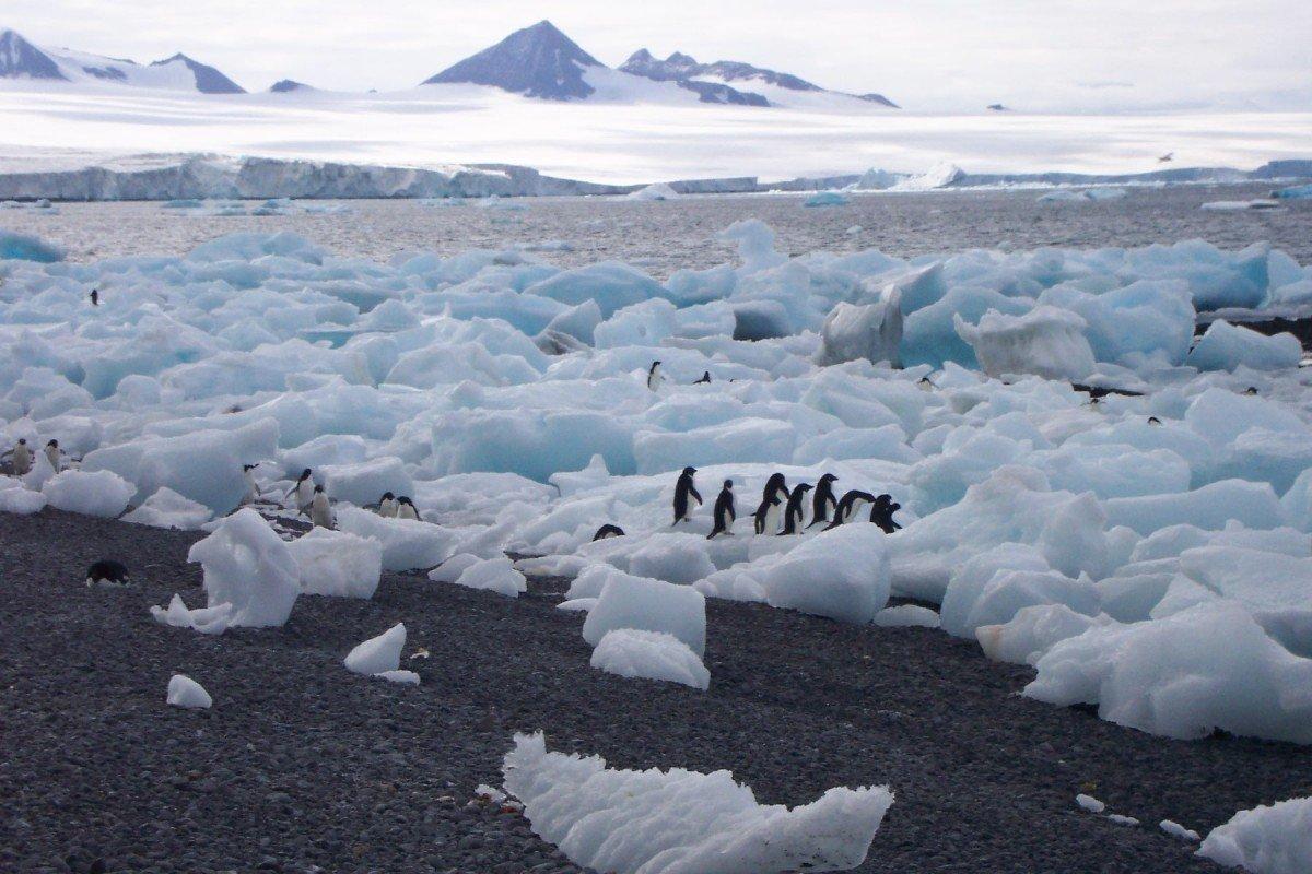 melting ice sheet penguins