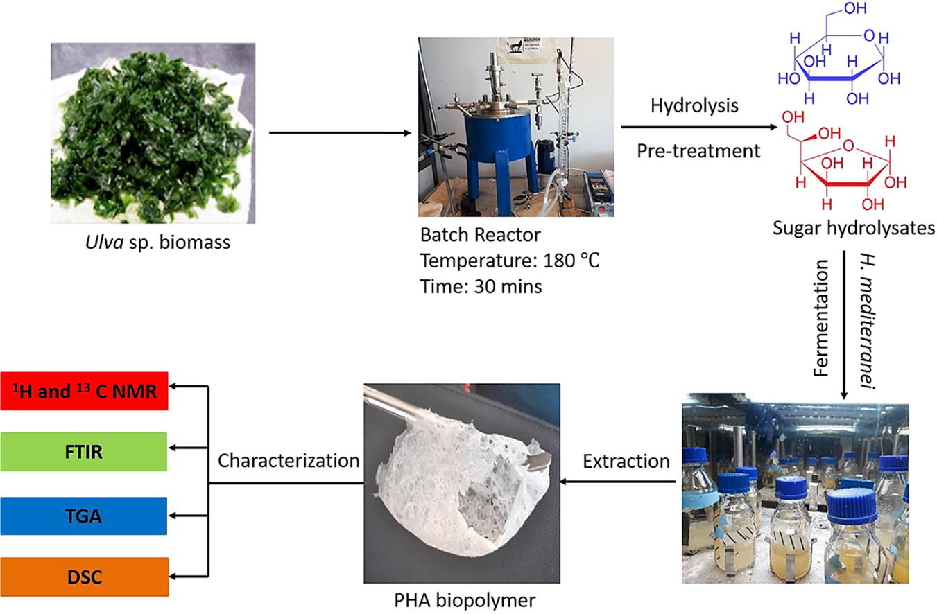 Bioplastics breakthough would be a boon for landfills, beaches and oceans