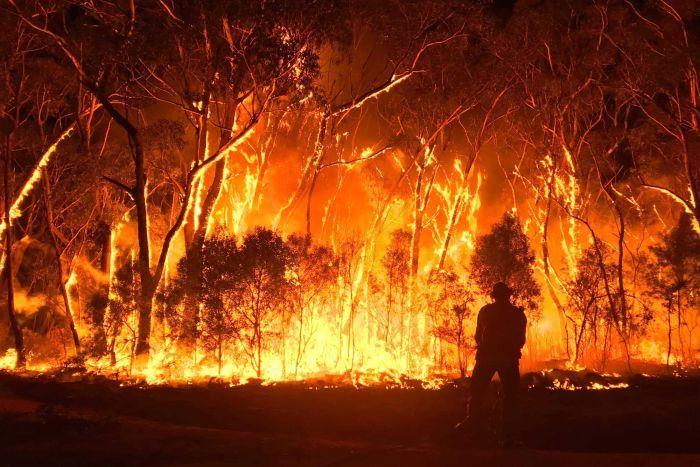 michael mann observes australia bushfire