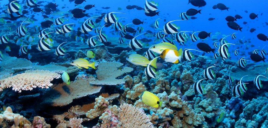 NOAA world ocean month