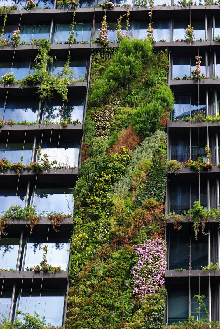 Green wall by Junglefy at One Central Park, Sydney. John Rayner, used with permission, Author provided