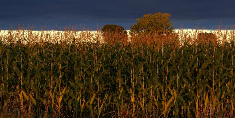 Bipartisan ag bill rewards climate friendly farmers