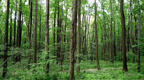 climate change forest