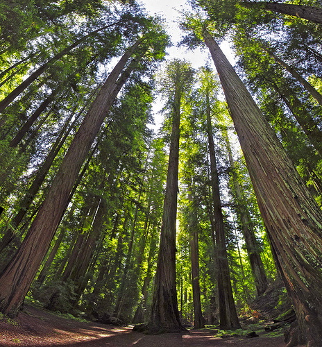 BLM Agrees To Protect Old Growth Forest In Oregon