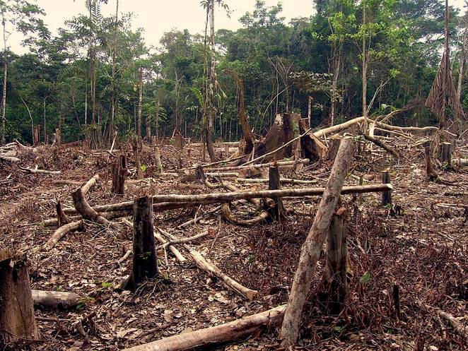 Amazon rainforest deforestation hurts climate change