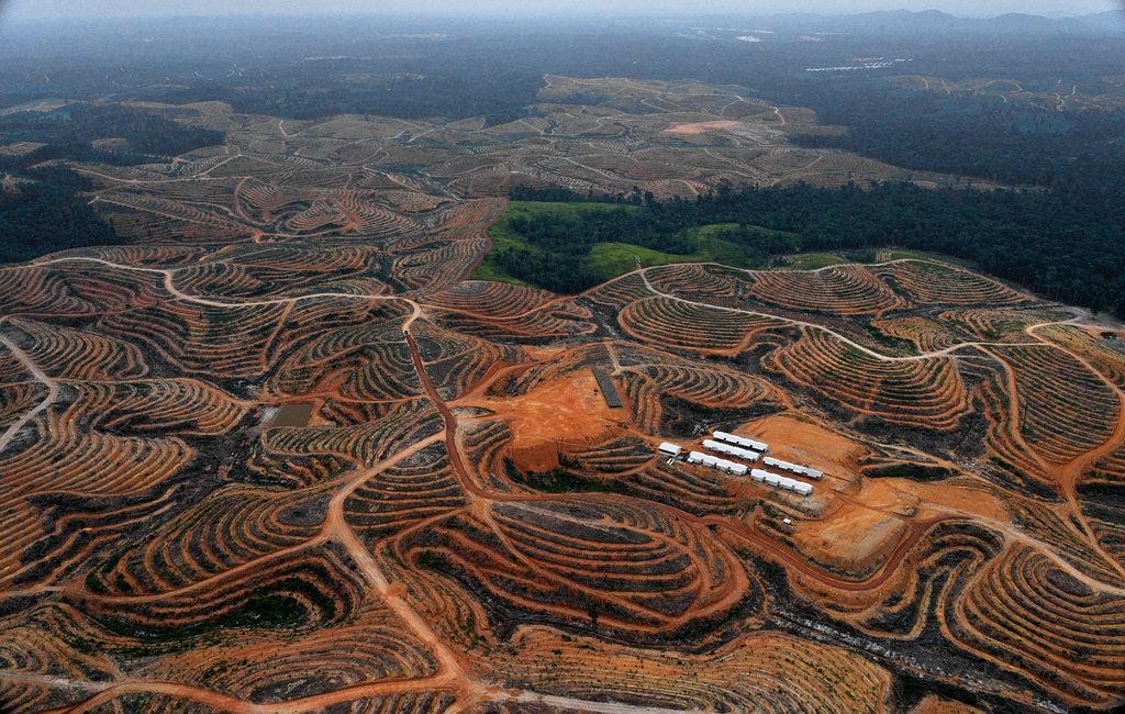 deforestation in indonesia