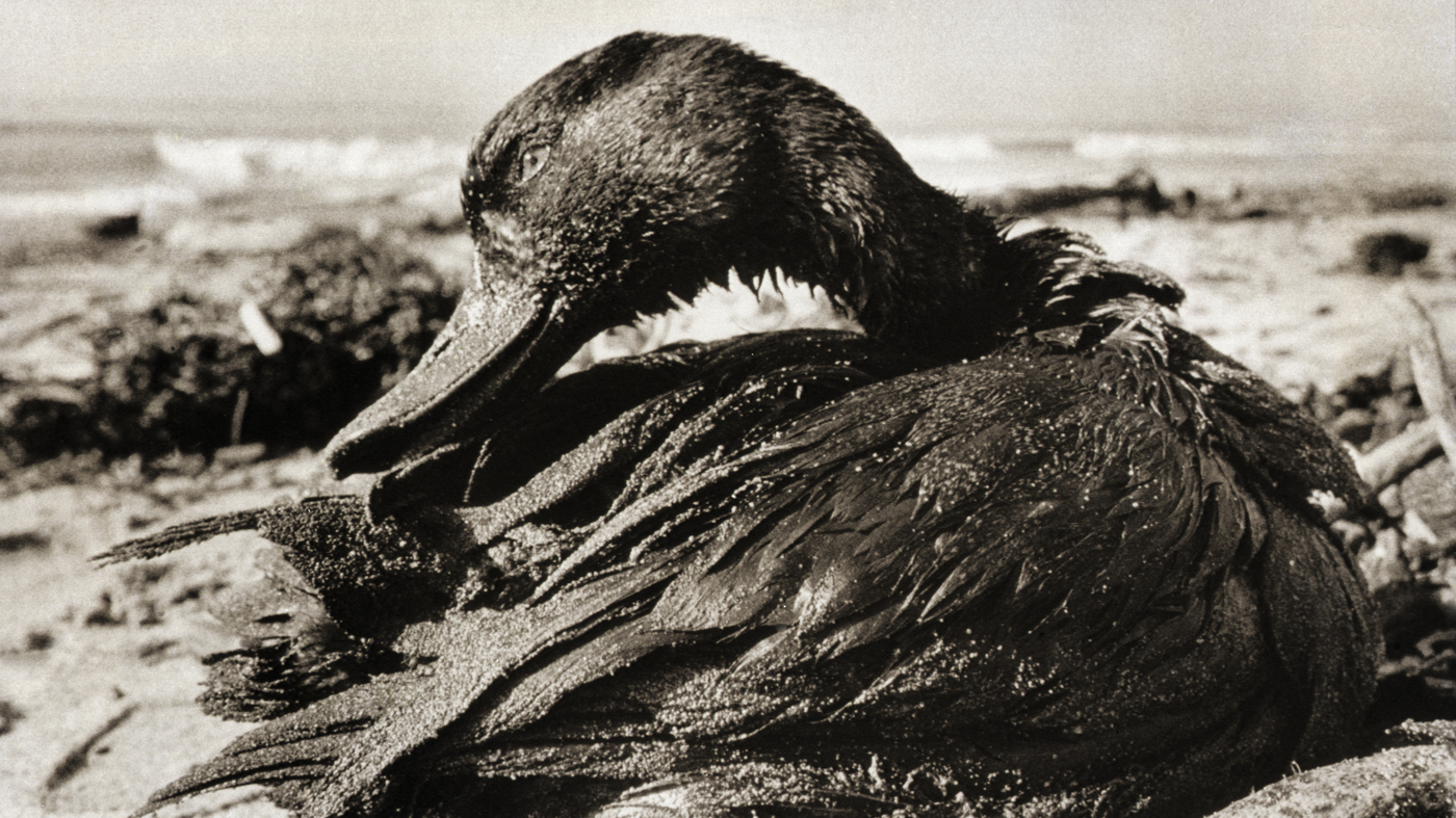 santa barbara oil spill 50 years ago