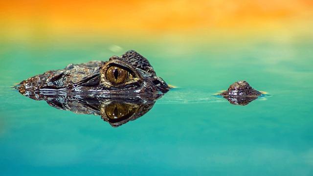 Drain the swamp EPA