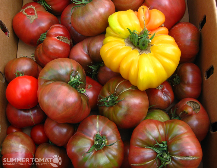 Heirloom tomatoes. Photo CC by Darya Pino on Flickr