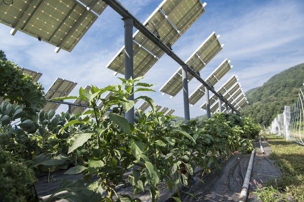 Farmers are learning how to deploy solar arrays and do farming both at the same time (photo by Dennis Schroeder, NREL).