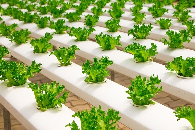 hydroponics, top 10 environmental benefits of growing food without dirt