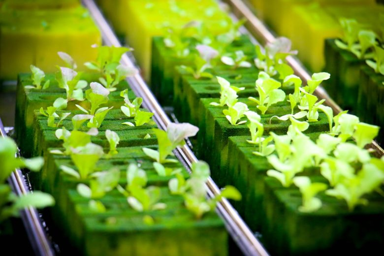 Hydroponics - growing the food we need without dirt